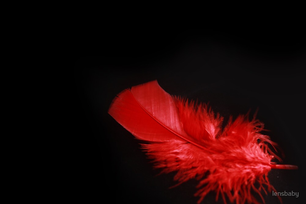 red feather for remembrance by lensbaby