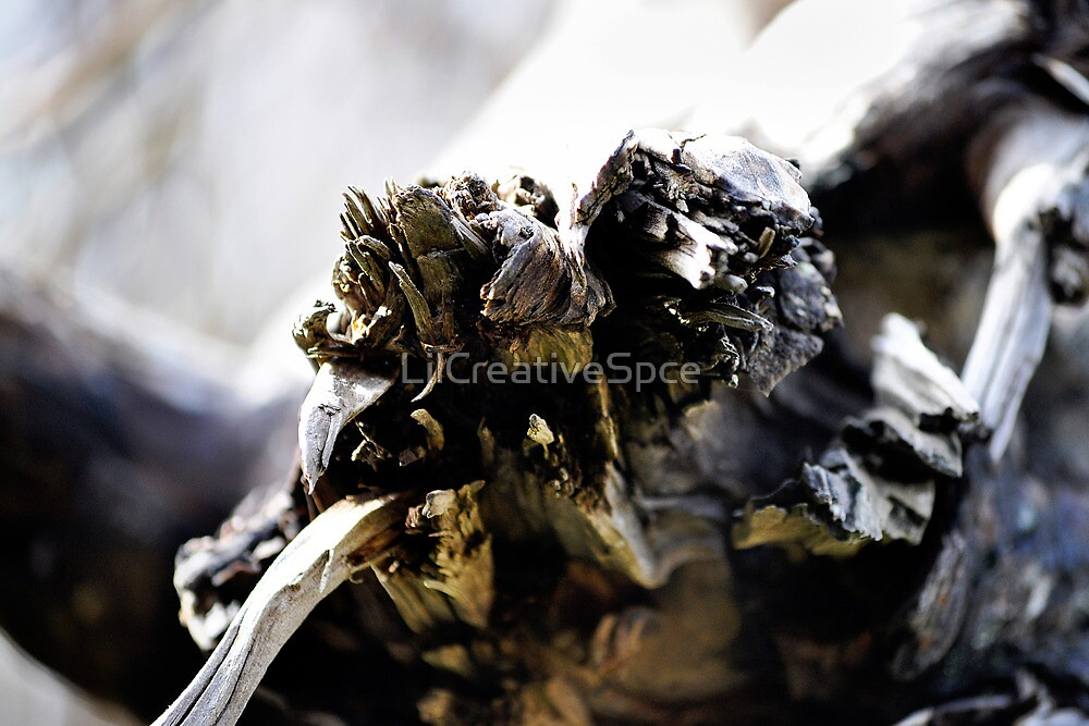 Drift Wood Close Up by LilCreativeSpce
