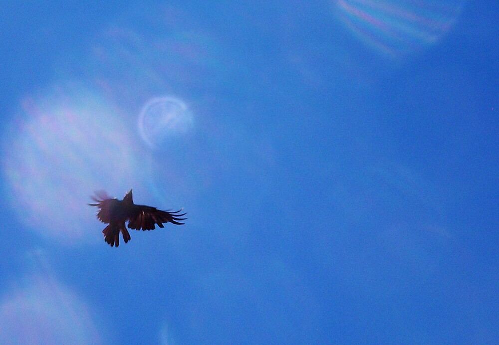 Crow 09 11 12 -  Four by Robert Phillips