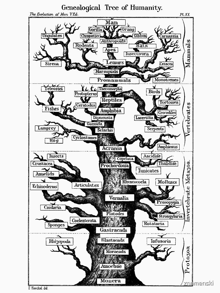 Genealogical Tree of Humanity by znamenski