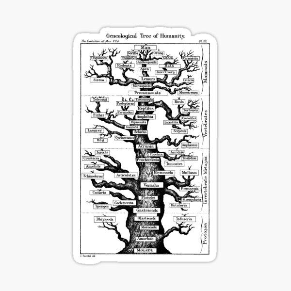 Genealogical Tree of Humanity Sticker