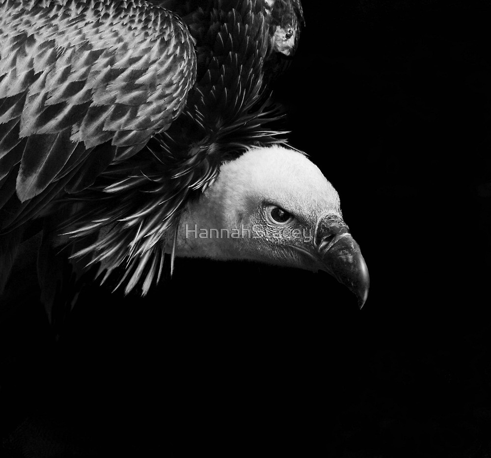 Vulture by HannahStacey
