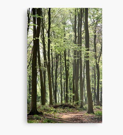 Path Through The Wood Metal Print