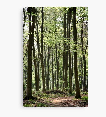 Path Through The Wood Canvas Print