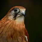 A Bird's Eye's View by Sea-Change