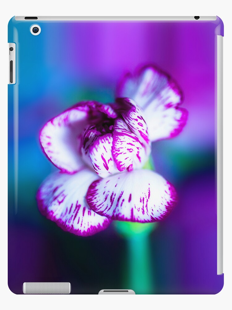 Colour Of Life XII [Print & iPad Case] by Damienne Bingham