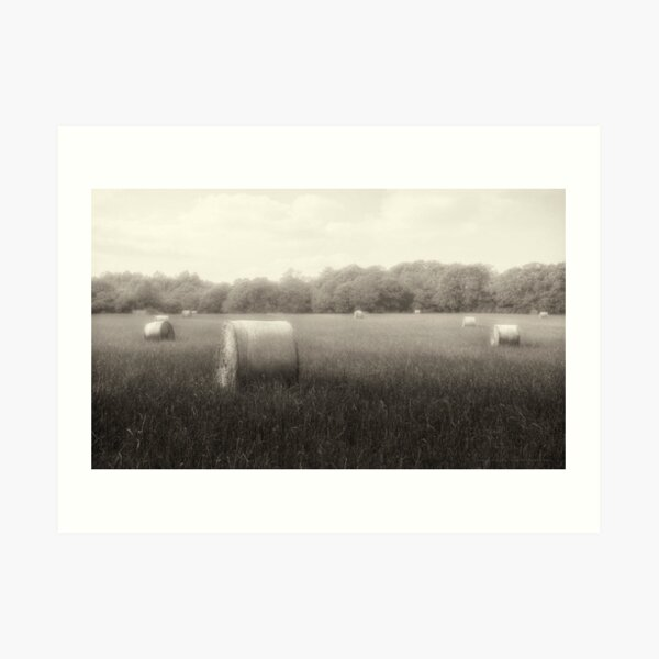 Hayfield in Fog  2012 Art Print