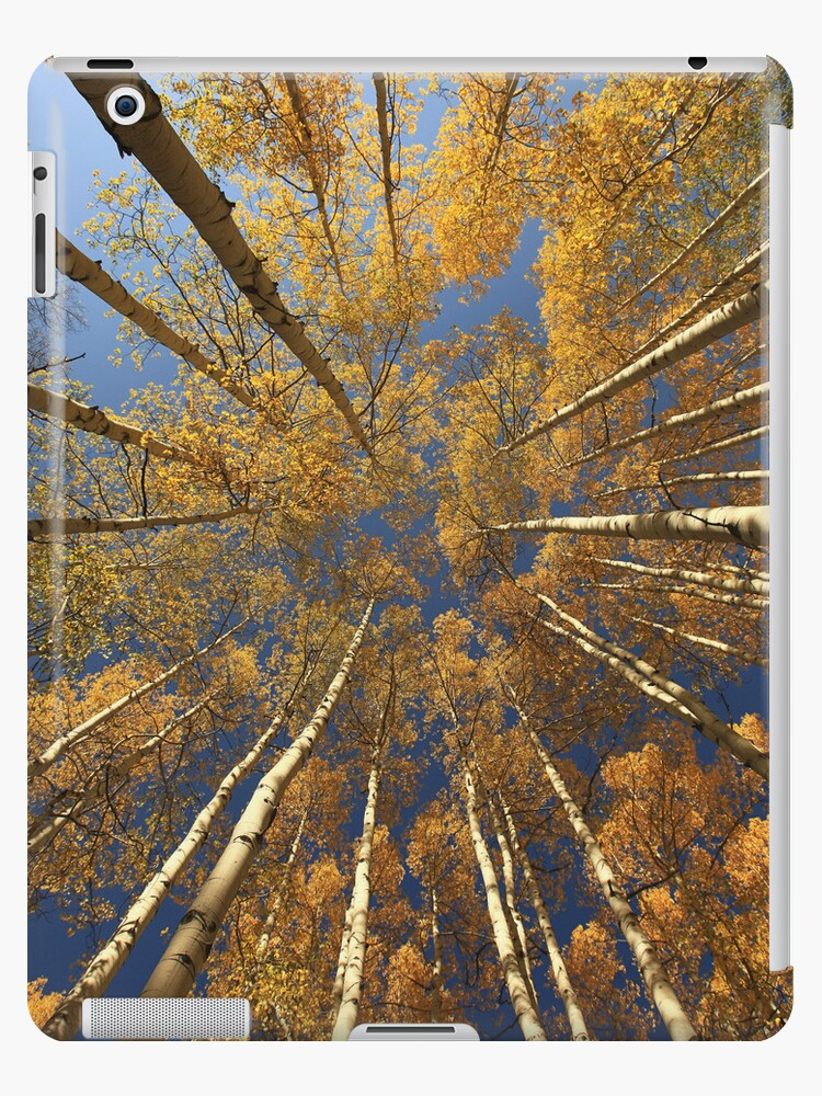 Kebler Pass Aspens iPad Case  by Wojciech Dabrowski