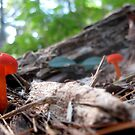 Little Red Mushrooms by Nicole S. Moore