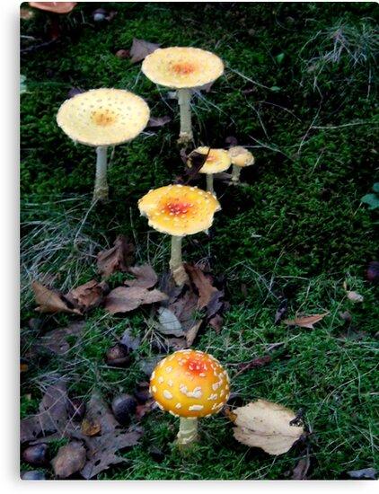 Amanita mushrooms by Nicole S. Moore