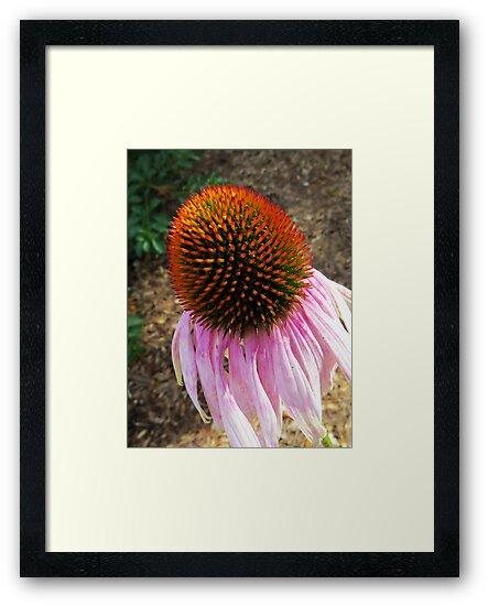 Echinacea - The Last Hurrah by AuntDot