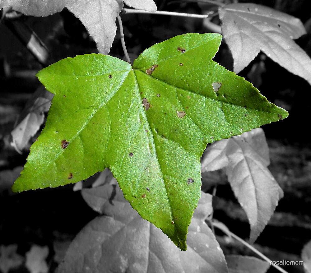 Green Leaf by rosaliemcm