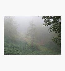My Backyard Photographic Print