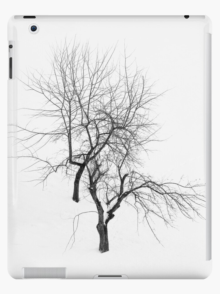 Winter Trees by Walter Quirtmair