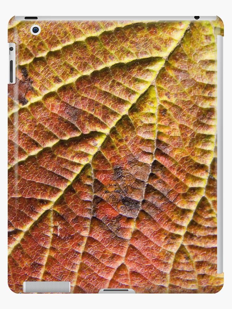 Fall Leaf by Walter Quirtmair
