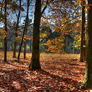 Autum forest by Peter Wiggerman