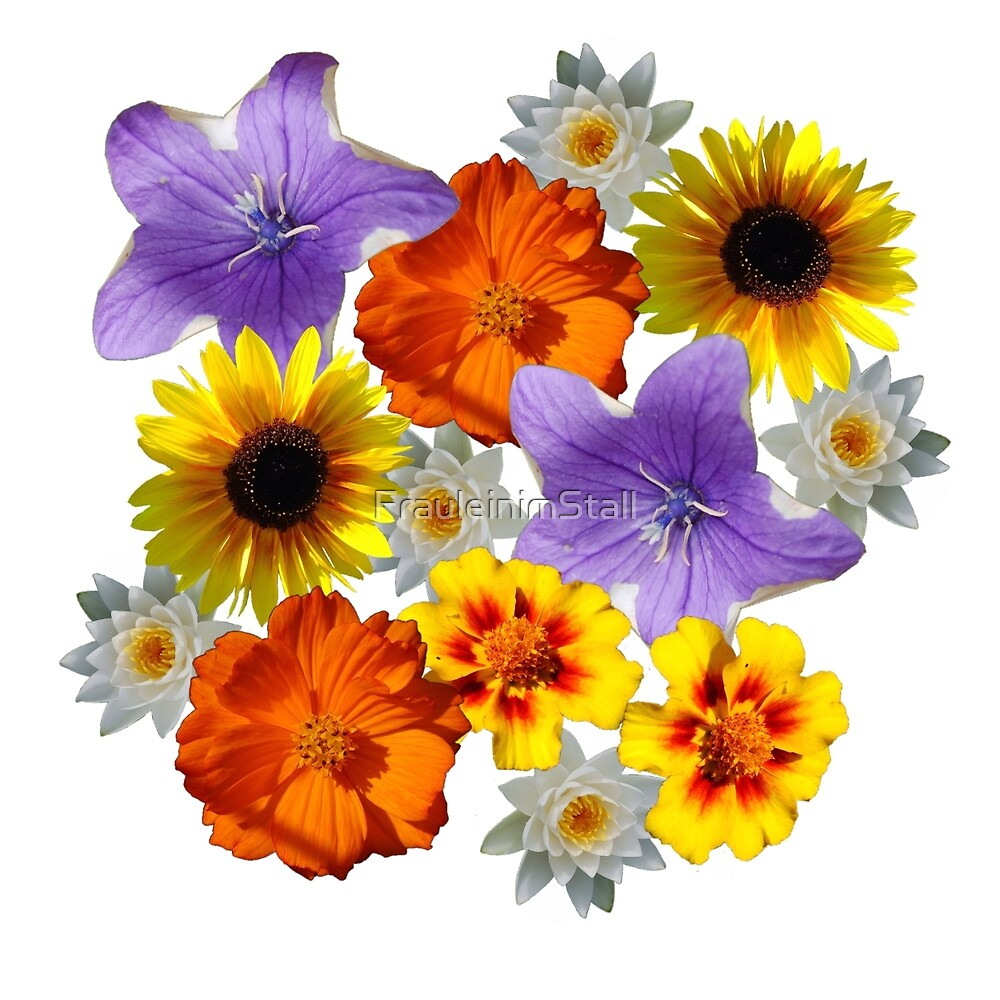 Flowercircle by FrauleinimStall