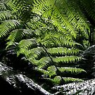 Hidden in New Zealand by RainaRaina