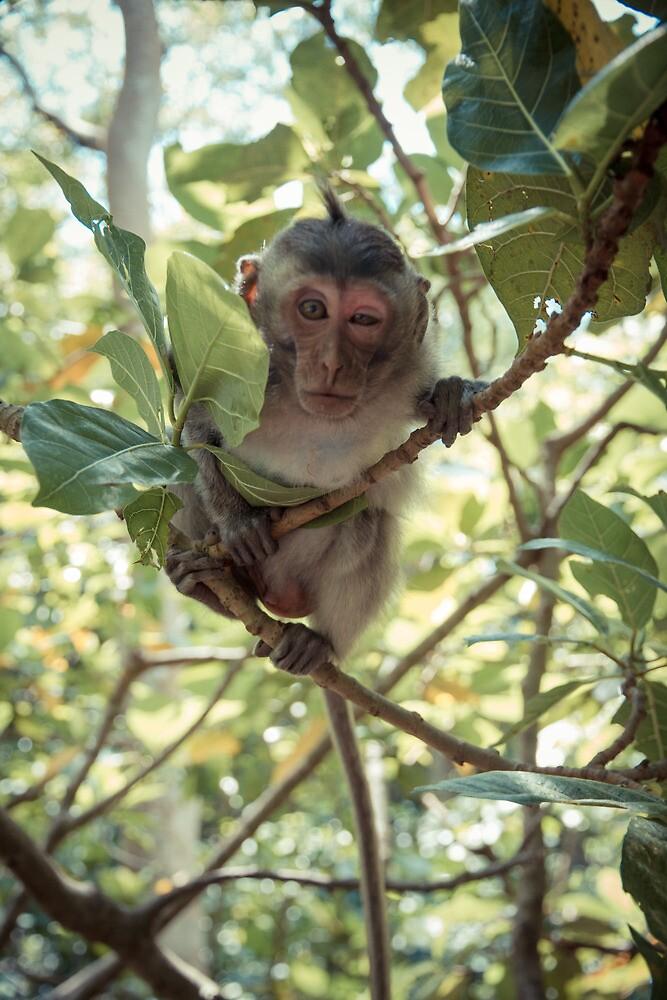 Crazy monkey by halans