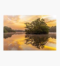 Sunrise in Epping Forest Photographic Print