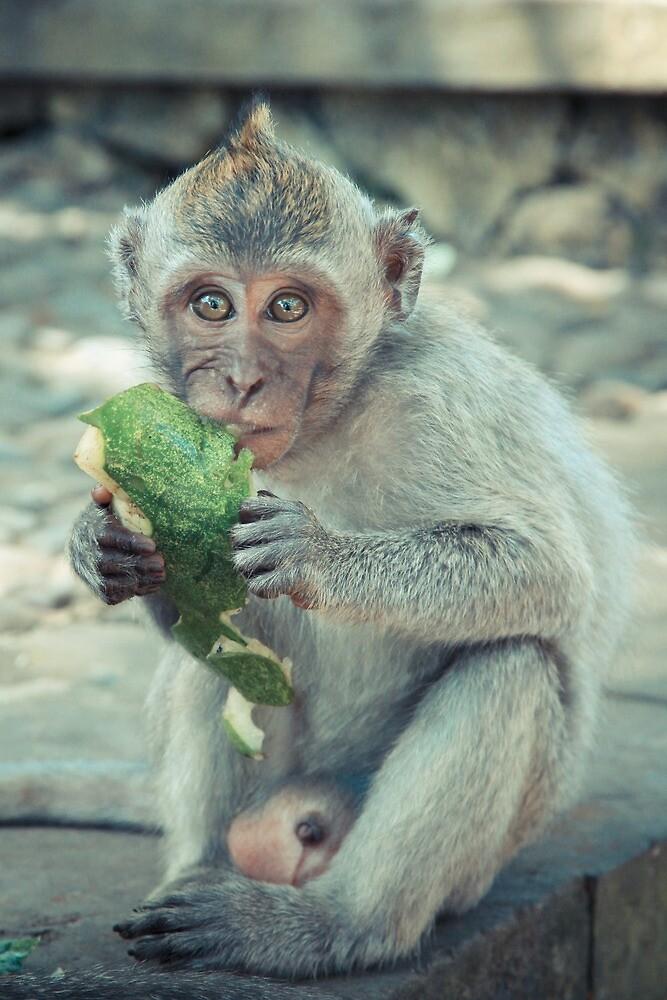 Eating monkey by halans