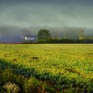A Yellow Field by Susan  Kimball