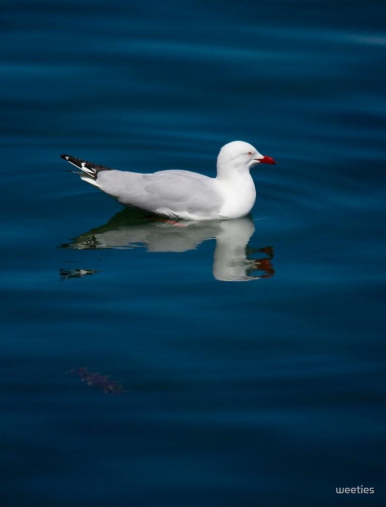 Watergull by weeties