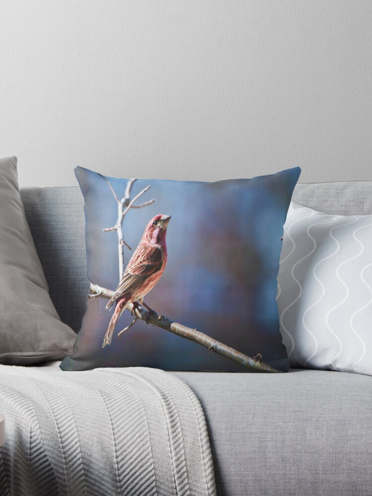 Male Purple Finch by barnsis