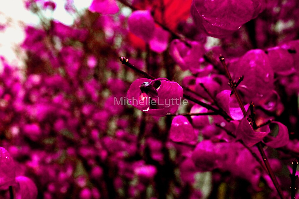 Untitled by MichelleLyttle