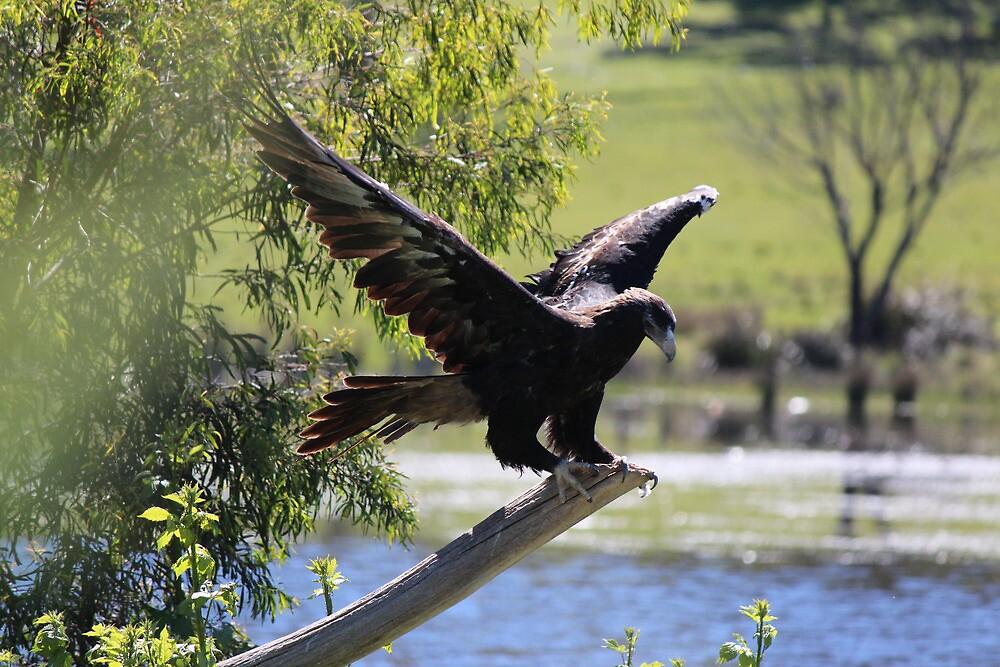 eagle  #1717 by gaylene