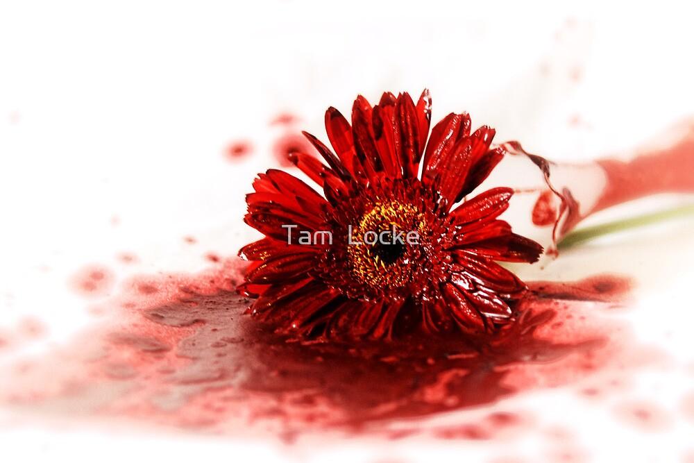 Cut Flowers by Tam  Locke
