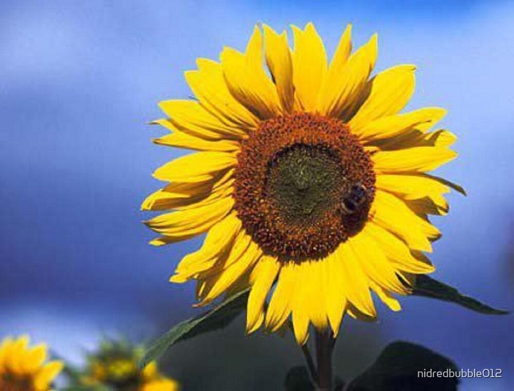 Bright Golden Yellow  Summer Sunflower  by nidredbubble012