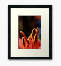 Stamens Framed Print