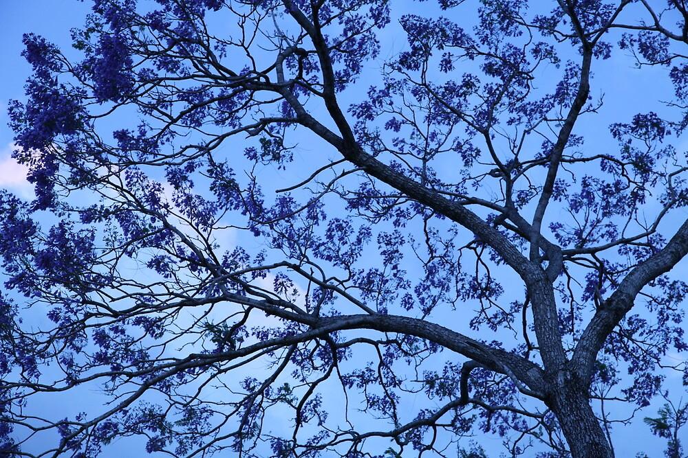 Jacaranda Tree by MiloAddict