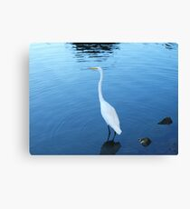 Poignant Lake Anza Swan Canvas Print