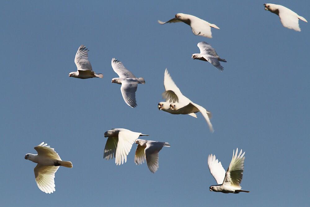 The Rowdy Flock by byronbackyard