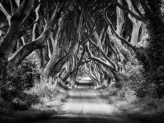 The Dark Hedges by Michael Breitung