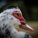 Muscovy by Barbara  Glover