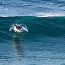 Master Surfer by diggle