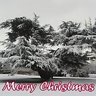 Merry Christmas - Tree by Peter Barrett
