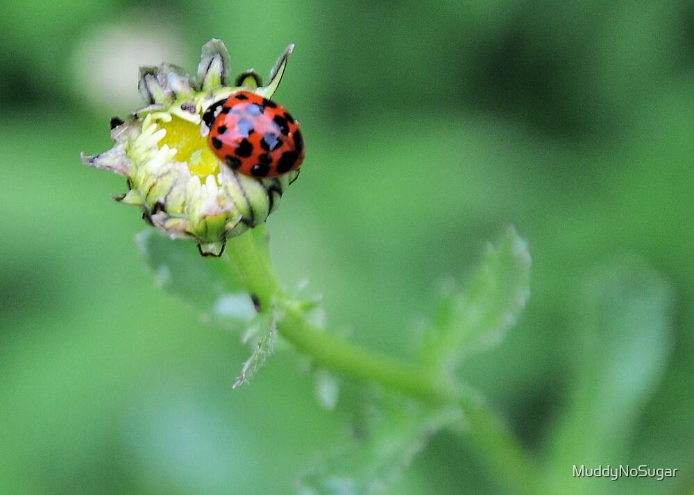 Lady bug by MuddyNoSugar