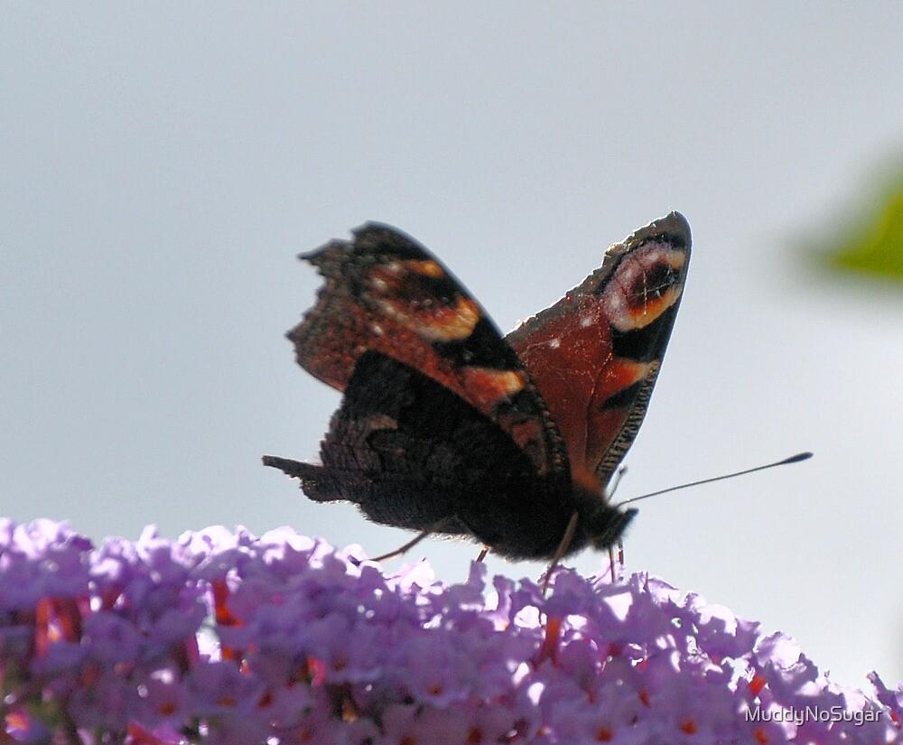 Peacock Butterfly by MuddyNoSugar
