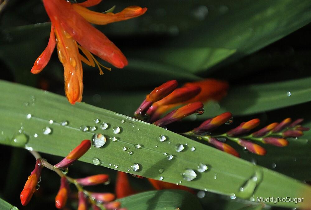 Rain drops by MuddyNoSugar