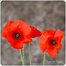 Remembrance. by caradione