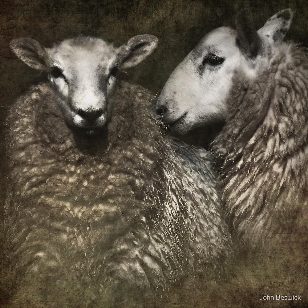 sheep by John Beswick
