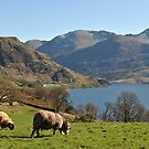 Sauer ved Buttermere by Knut P.  Boyum