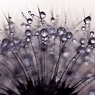 droplets of mauve by Ingrid Beddoes