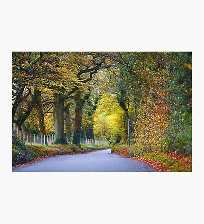 Autumn Road Photographic Print