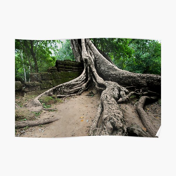 The Roots of Ta Prohm, Cambodia Poster