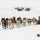 Dog Sledding by Patricia Jacobs DPAGB BPE4